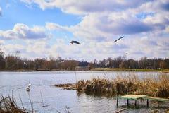 Kleine pijler op het meer, in de achtergrondzwanen Royalty-vrije Stock Fotografie
