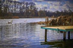 Kleine pijler op het meer, in de achtergrondzwanen Stock Fotografie
