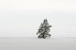 Kleine pijnboom onder sneeuw Stock Afbeeldingen