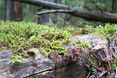 Kleine Pilze, die auf einem Stumpf wachsen stockbilder