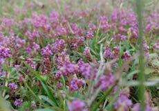Kleine pinkbloem op gras royalty-vrije stock afbeelding