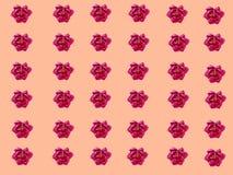 Kleine pioenen Stock Afbeeldingen