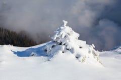 Kleine pluizige die sparren met webby sneeuw worden behandeld Nette boomtribune in sneeuw geveegde bergweide onder een grijze de  Stock Afbeeldingen