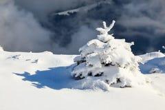 Kleine pluizige die sparren met webby sneeuw worden behandeld Nette boomtribune in sneeuw geveegde bergweide onder een grijze de  Stock Foto