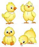 Kleine pluizige kippen Royalty-vrije Stock Foto's