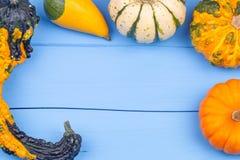 Kleine pompoenen op een blauwe achtergrond Stock Afbeeldingen