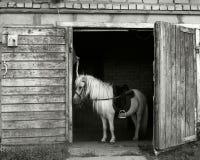 Kleine poney Royalty-vrije Stock Afbeelding