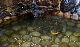 Kleine pool met vissen Dombay de Republiek van karachay-Cherkessia in de Noord-Kaukasus, Rusland Stock Afbeeldingen