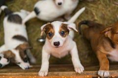 Kleine puppy in de schuilplaats royalty-vrije stock foto