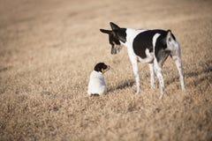 Kleine puppy en hond in yard stock foto's