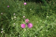 Kleine purperachtige bloemen Stock Afbeeldingen