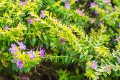 Kleine purpere bloemen royalty-vrije stock fotografie
