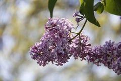 Kleine Purpere Bloemen Royalty-vrije Stock Afbeeldingen