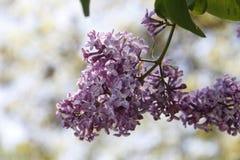 Kleine Purpere Bloemen Stock Foto