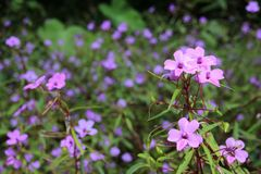 Kleine purpere bloemen Royalty-vrije Stock Afbeelding