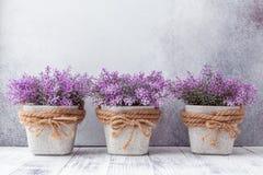 Kleine purpere bloemen in grijze ceramische potten op steen Rustieke stijl als achtergrond royalty-vrije stock fotografie
