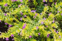 Kleine purpere bloemen met groene bladeren royalty-vrije stock foto