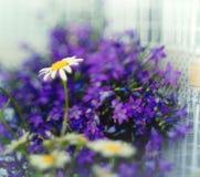 Kleine purpere de lente wilde bloemen Royalty-vrije Stock Foto