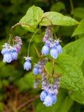 Kleine purpurrote alpine Blumen in der Wiese Stockfotografie