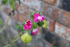 Kleine purpurrote Blume Lizenzfreie Stockbilder