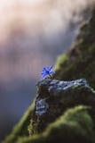 Kleine purpurrote Blume stockfotos