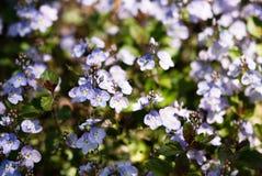 Kleine purpurrote Blumen in der Sommerzeit lizenzfreie stockbilder