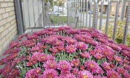 Kleine purpurrote schöne Blumen Stockfotos