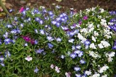 Kleine purpurrote und weiße Blume Stockfotografie