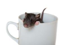 Kleine Ratte in einem Cup Lizenzfreie Stockbilder