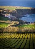 Kleine Regelung auf der Küste von den Azoren Stockfotos