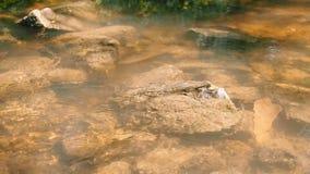 Kleine rivier bij de de zomerdag Stromend waterclose-up Bij de bodem van de stroom, onder water, zichtbare stenen E stock video