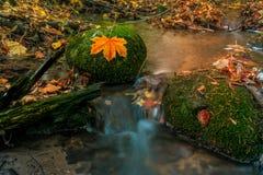 Kleine rivier in de herfstkleuren in het bos stock foto's