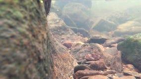 Kleine rivier in de winter, video met onderdompeling onder water stock footage