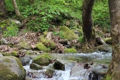 Kleine rivier dichtbij aan Petrich Stock Foto's