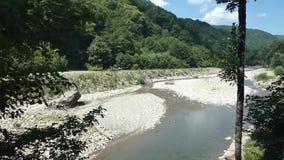 Kleine rivier dichtbij bos in de bergen, de zomer zonnige dag stock videobeelden