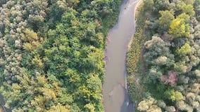 Kleine rivier die door het hout vloeien stock videobeelden
