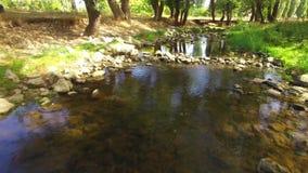 Kleine Rivier die in Park stromen stock footage