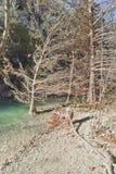 Kleine rivier in Hamilton Pool Stock Afbeelding