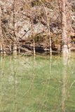 Kleine rivier in Hamilton Pool Stock Afbeeldingen
