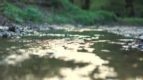 Kleine rivier in het bos stock videobeelden