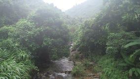 Kleine rivier met groen gras in tropische bergen stock footage