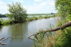Kleine rivier met omvergeworpen boom stock afbeelding