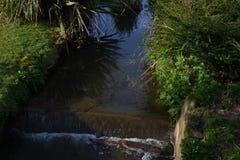 Kleine rivier in natuurlijke ecosistem royalty-vrije stock foto's