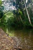 Kleine rivier op Kauai Stock Foto's