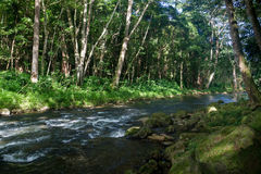 Kleine rivier op Kauai Royalty-vrije Stock Foto