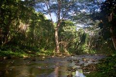 Kleine rivier op Kauai Stock Afbeelding