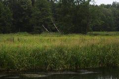 Kleine rivier in Polen Stock Afbeeldingen