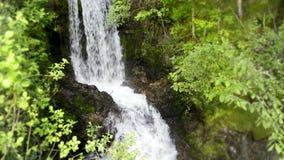 Kleine rivierwaterval die in groen de klippenbos van de boomberg lopen in het verbazende 4k regelmatige wilde schot van het aardl stock videobeelden