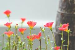 Kleine rode bloem Royalty-vrije Stock Afbeeldingen