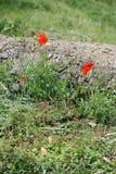 Kleine rode bloemen tegen een gevallen boomboomstam Stock Afbeeldingen